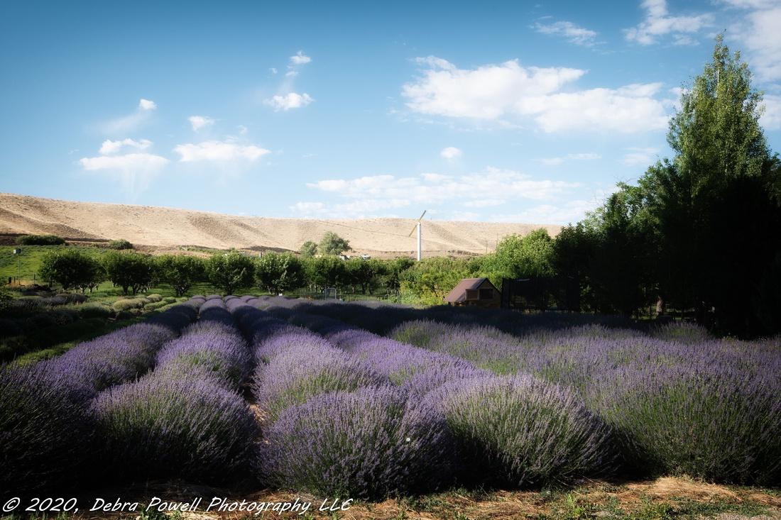 Palisade Lavender Fields